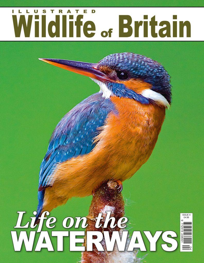 Life on the Waterways Wildlife Of Britain Georgina Probert Writing Writer Journalist Journalism Editing Copy Proofreading Sevenoaks Kent London South East