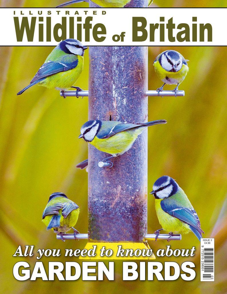 Wildlife Of Britain Georgina Probert Writing Writer Journalist Journalism Editing Copy Proofreading Sevenoaks Kent London South East